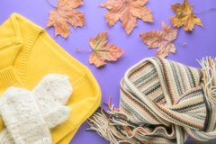Autumn winter fashion seasonal concept sweater cardigan Scandinavian knitted scarf and white fluffy homemade mittens. Fall fallen maple leaves on paper purple royalty free stock image