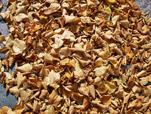 Autumn winter leaves Royalty Free Stock Images
