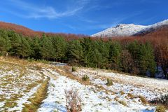 Autumn - winter meadow and forest Royalty Free Stock Photography
