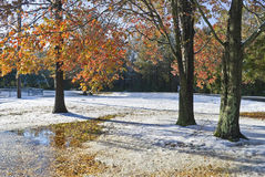 Autumn Winter Park Royalty Free Stock Photo