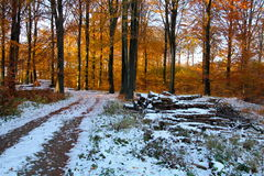 Autumn and winter at the same time. In November stock image
