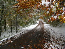 Autumn and winter in the same time on a path Royalty Free Stock Photography