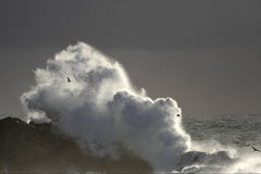 Autumn and winter sea storm Royalty Free Stock Photo
