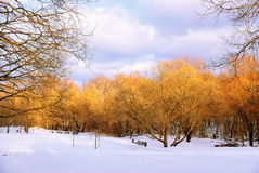 Autumn in Winter Stock Photography