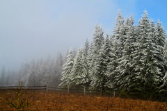 Autumn and Winter Royalty Free Stock Photography