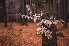 Autumn and winter in the woods Royalty Free Stock Photo