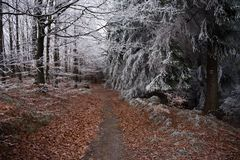 Autumn and winter in the woods Stock Image