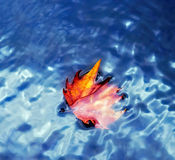 Autumn withered leaf on the water. A autumn withered leaf on the water Stock Photos