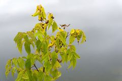 Autumn maple leaves on a blurred background stock images