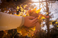 Autumn woman hand with yellow fall leaves. Close up of an autumn woman hand with yellow fall leaves Stock Photos