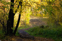 Autumn wood. Footpath in an autumn wood Stock Photography