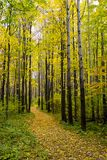 Autumn wood. Path in an autumn wood Royalty Free Stock Photography