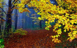 Autumn in wood. Fog in autumn wood. The picture is made in the Kiev botanical garden, Ukraine Royalty Free Stock Photos