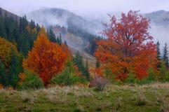 Autumn in wood Stock Photo