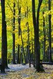 Autumn wood. Among trees of an autumn wood Royalty Free Stock Photos