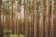 In autumn wood Royalty Free Stock Photography