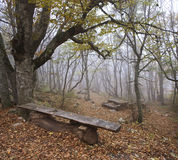 Autumn wood. The Fog has gone down on autumn wood Royalty Free Stock Images