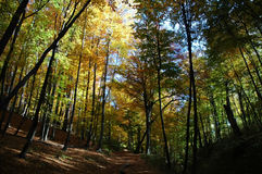 In an autumn wood. It is dear among trees Stock Images