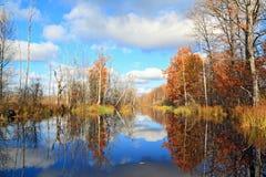 Autumn wood Stock Image