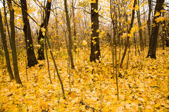 Autumn wood Stock Photos