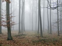 Autumn wood. Wood with fog in a early autumn morning Royalty Free Stock Photo