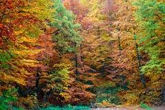 Autumn wood Stock Photography