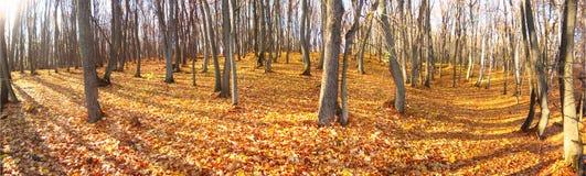 Autumn in wood Stock Image