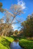 Autumn wood bridge over creek Stock Image