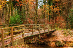 Autumn. Wood with a bridge and small stream Royalty Free Stock Photography