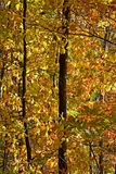 Autumn wood Royalty Free Stock Photo