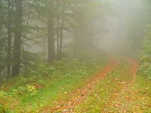 Autumn wood with fog and beech leaves Royalty Free Stock Photo