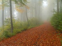 Autumn wood with fog and beech leaves Stock Image