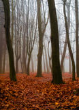 Autumn in the wood. Autumn in the forest with fog and leafs on the floor Royalty Free Stock Image