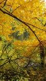 Autumn wood Stock Photo