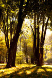 Autumn wood Royalty Free Stock Images