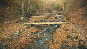 Autumn wood landscape wild nature creek motion stock photography