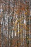 Autumn Wood magique images stock