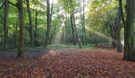 Autumn Wood Miskin South Wales Image stock