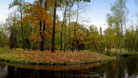 Autumn wood is reflected in the lake.  stock video footage