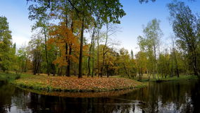 Autumn wood is reflected in the lake.  stock footage