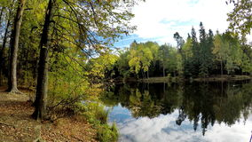 Autumn wood is reflected in the lake. In a sunny day stock footage