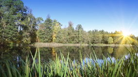 Autumn wood is reflected in the lake in a sunny day.  stock video footage