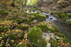 Autumn wood with the river and yellow foliage Stock Photography