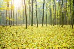 Autumn wood Stock Images