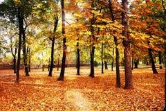 Autumn wood with sun rays Royalty Free Stock Photo
