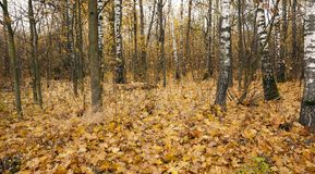 The autumn wood Stock Images
