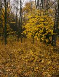 The autumn wood Stock Photography