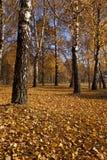 The autumn wood Stock Image