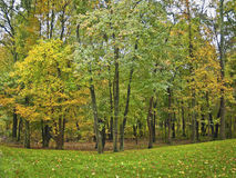 Autumn Wooded Lot Stock Image
