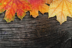 Autumn wooden background Stock Photo
